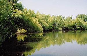 A summer pond on the Stewardship Farm.