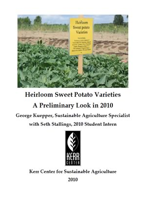 Heirloom Variety Trial Report 2010: Sweet Potato