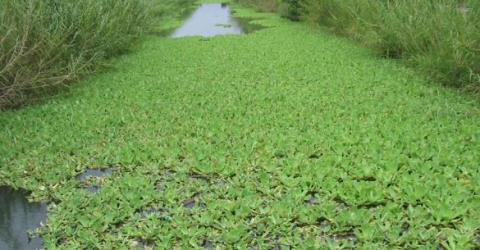 Pond Management Resources