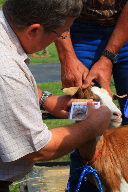 Managing Goats for Herd Health