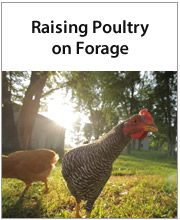 Raising Poultry on Forage