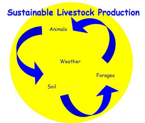 Sustainable Livestock Production Circle