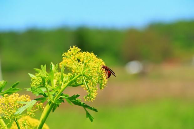 Native Pollinator Books