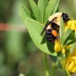 sustainability-bee