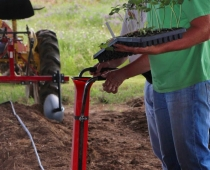 George Kuepper and Bill Edgar demonstrate transplanting with the Hatfield transplanter.