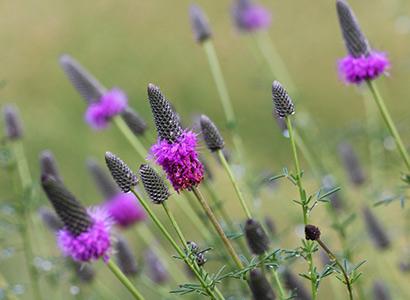 purple-prairie-landing