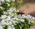 Beekeeping Workshop March 28