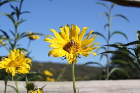 Plan your Pollinator-Friendly Landscape
