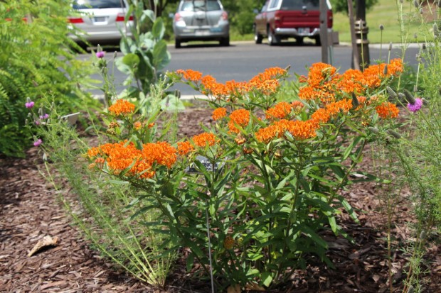 General Pollinator Plant Landscaping Guides