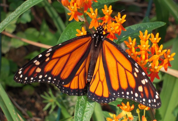Job Announcement: Grazing Lands Pollinator Ecologist and NRCS Partner Biologist