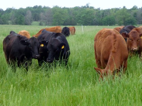 Grazing Workshop June 9