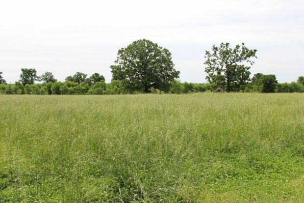 Spring Grazing Management: Off the Fescue