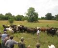 Grass & Water: Livestock Workshop June 4