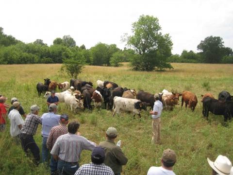 Livestock Workshop