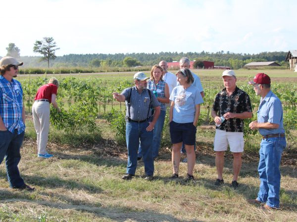 George Kuepper gives a tour of the Cannon Horticulture Plots elderberry planting during the September 2015 elderberry workshop.