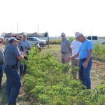 Missouri elderberry grower Terry Durham (right) discusses elderberry culture in the Cannon Horticulture Plots elderberry planting during the September 2015 elderberry workshop.