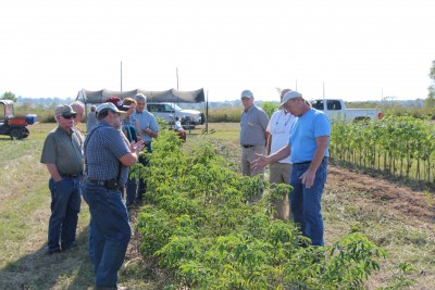 Missouri elderberry grower Terry Durham (right) discusses elderberry culture in the Cannon Horticulture Plots elderberry planting during the September 2015 elderberry workshop.