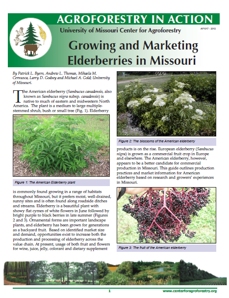 Growing and Marketing Elderberries