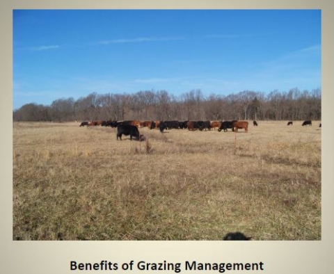 Grazing Management Basics