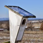 peterson_bluebird_house_cropped