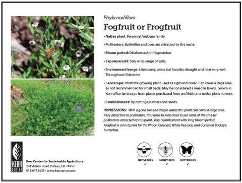 Pollinator Plant Profile: Fogfruit or Frogfruit