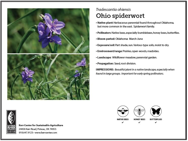 Conservation library kerr center pollinator plant profile ohio spiderwort publicscrutiny Image collections