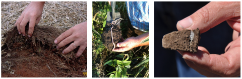 Soil Health: Successful Production on the Farm and Ranch