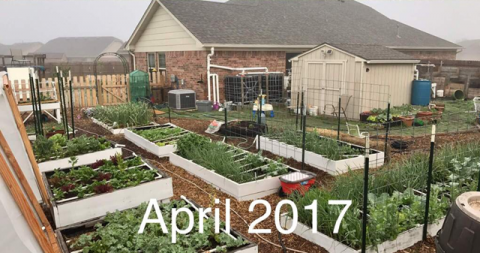 How We Converted Our Backyard into an Urban Food Farm