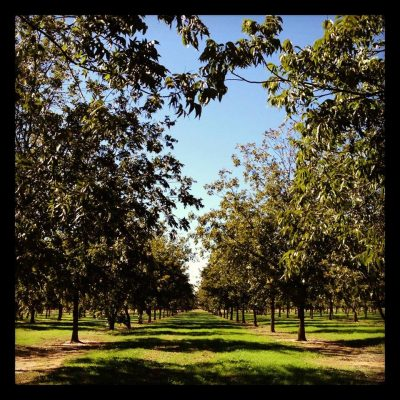 Fall Pecan Field Day @ Sapulpa (Knight Creek Farms) | Sapulpa | Oklahoma | United States