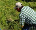 Estimating Forage Availability