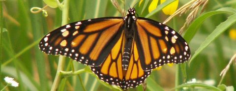Monarch Meetup