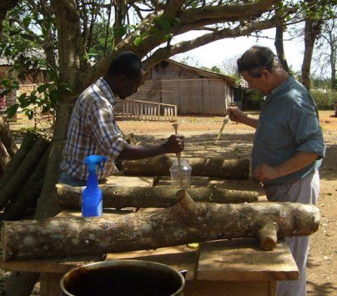 Workshop: How to Grow Shiitake Mushrooms on Logs