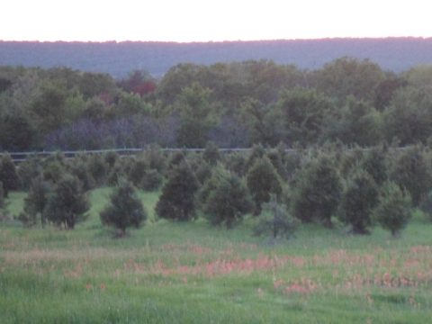 Field Day: Organic and Sustainable Rural Living, Christmas Trees; Medicinal Herbs; Water Conservation; Healthy Lifestyle; Wildlife Preservation