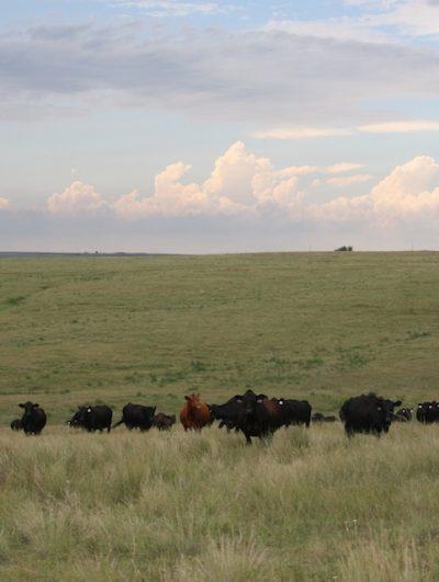 Sustainable Rangelands Symposium @ Lubbock, TX (National Ranching Heritage Center)