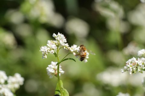 Beekeeping Workshop June 12