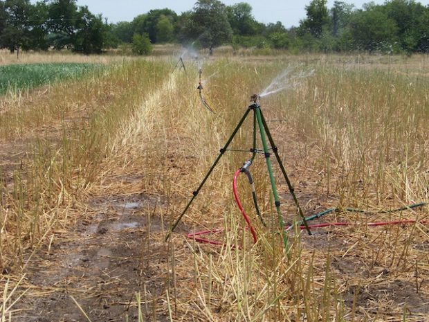 Stretching Every Drop: Summer Irrigation Tips