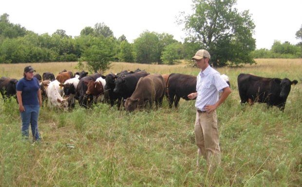 Starting From Scratch: Multispecies Rotational Grazing in Three Months