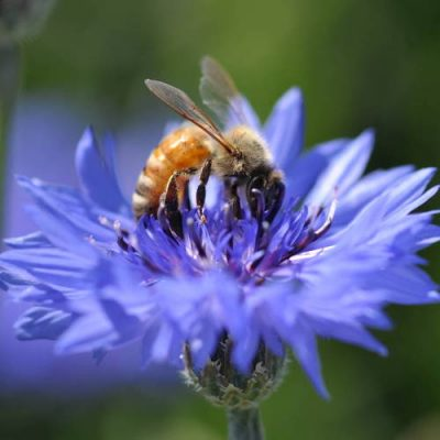 Fall Beekeeping Course @ Tulsa (Wright Christian Academy)