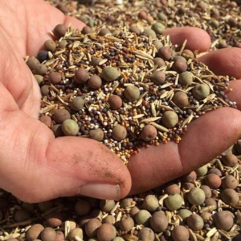 Workshop: Seed Saving