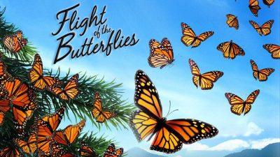 Film: Flight of the Butterflies Outdoor Screening @ Oklahoma City (Myriad Botanical Gardens)