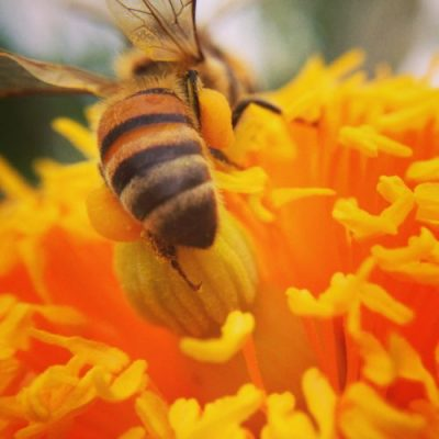 Bee Keeping 101 @ Wister (Wister High School)
