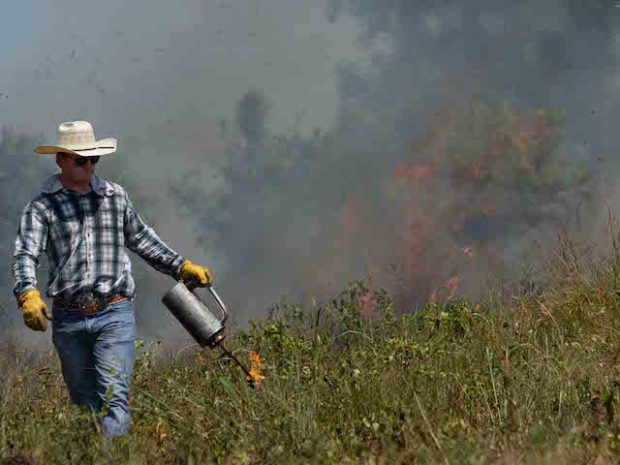 Field Day: How to Use Prescribed Fire for Wildlife and Livestock
