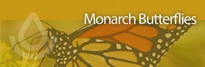 Deadline: NRCS EQIP Monarch Butterfly Habitat Development Project
