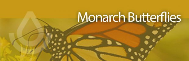 Apply by Dec. 21 for NRCS Monarch Habitat Funding