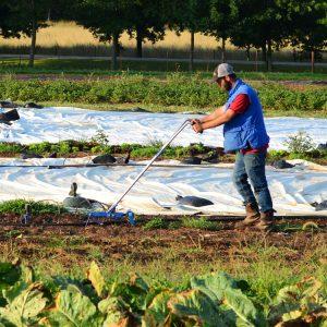 Application Deadline: Incubator Farm Plots