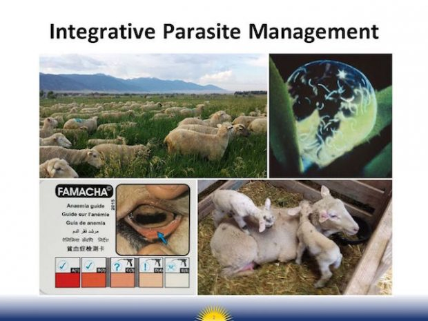 Webinar: Barber Pole Worms in the West