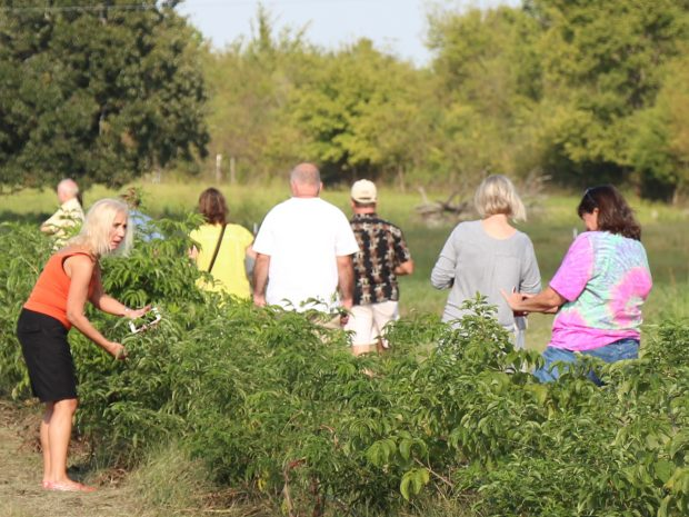 Kerr Center Elderberry Workshop July 13