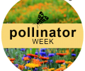 Celebrate Pollinator Week
