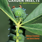Cover image of Garden Insects of North America