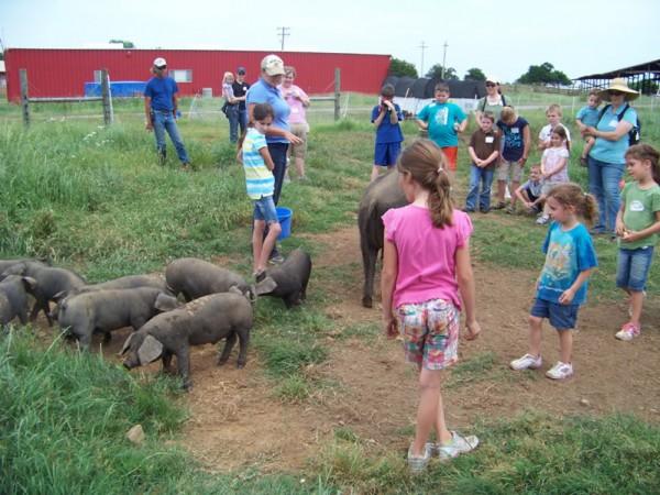 tour-pigs